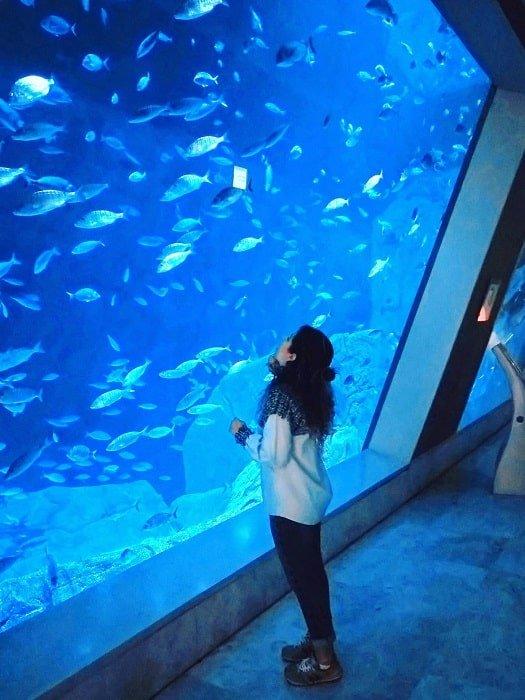 Экскурсия в океанариум в Стамбуле