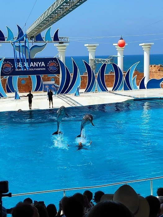 Дельфинарий в Аланье