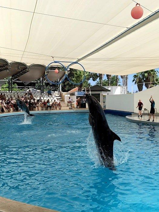 Дельфинарий в Анталии