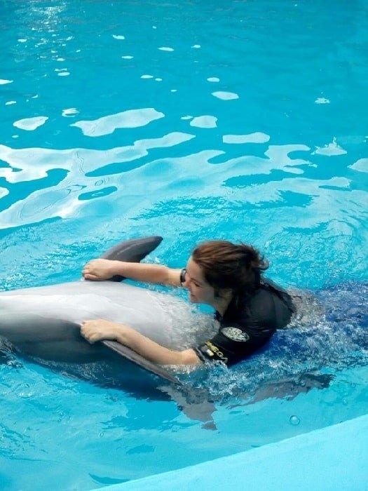 Плавание с дельфинами в Аланье