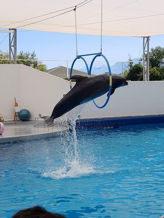 Дельфинарий в Белеке