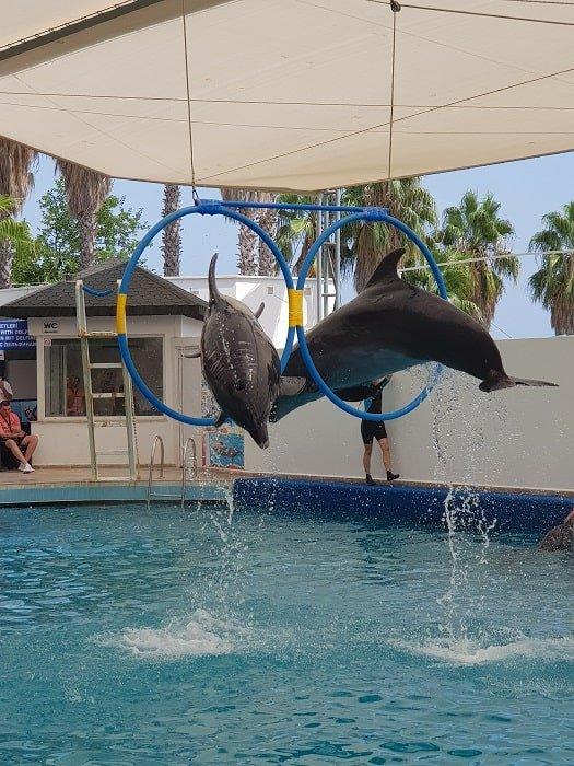Дельфинарий в Сиде