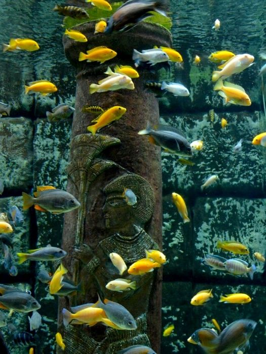 Океанариум Анталии из Белека
