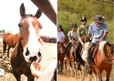 Сафари на лошадях в Белеке